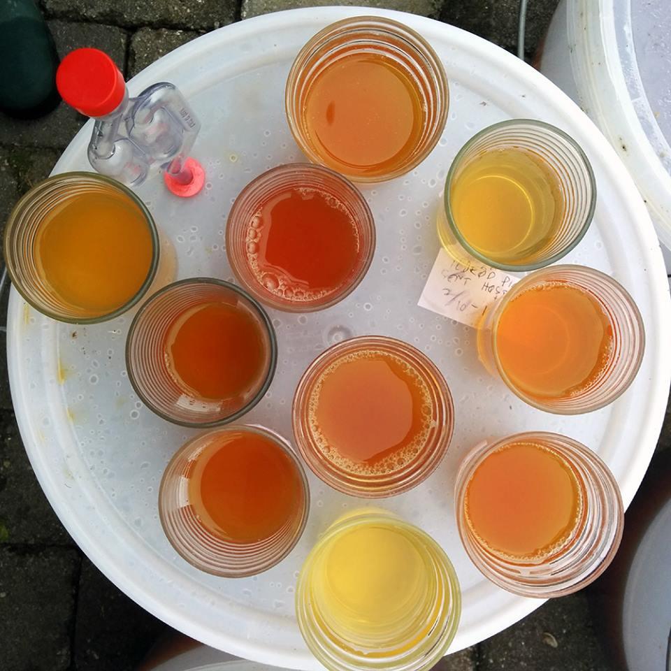cider-smagsprøver